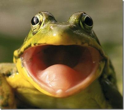 bigmouthfrogw