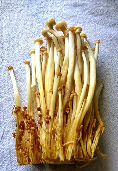 enoki-mushrooms